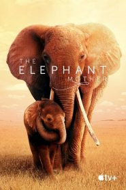 The Elephant Mother papystreaming